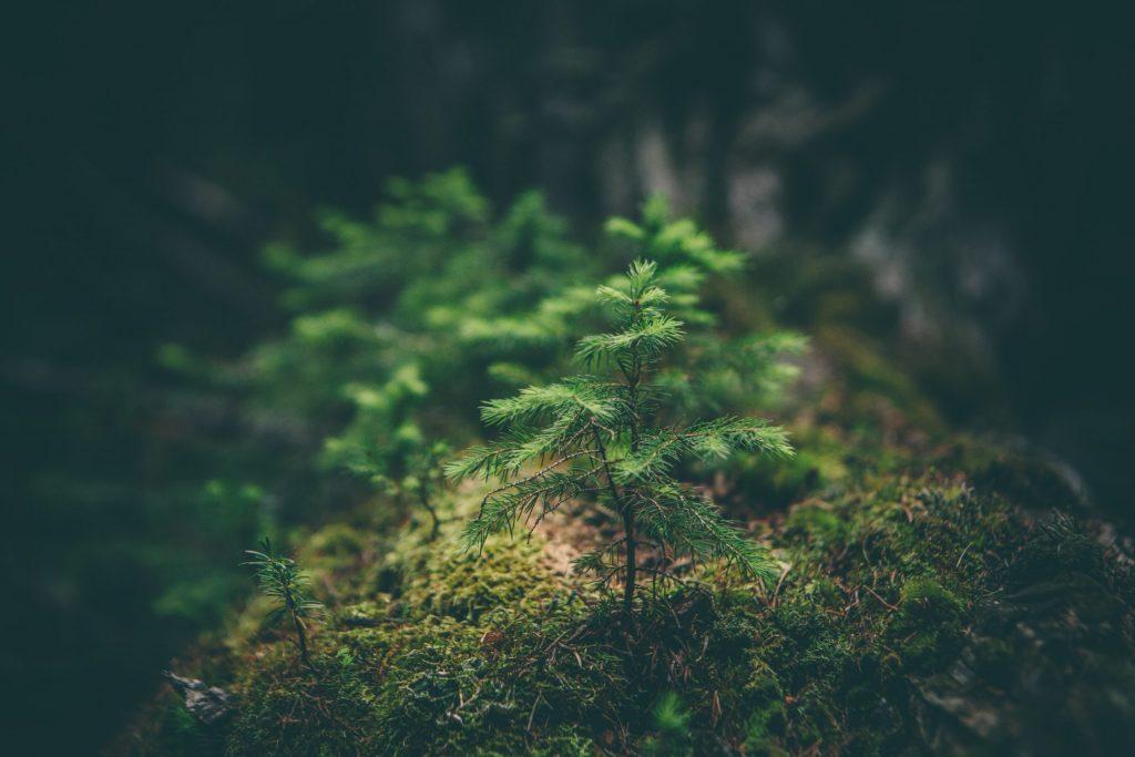 Photo of sapling